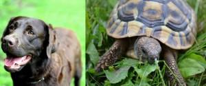 perro y tortuga, rápido y lento